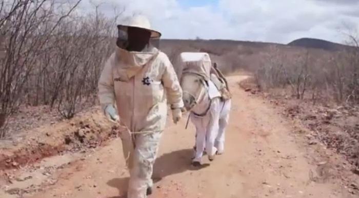 apicultore_